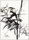 Contemporary Ink Bamboo Painting On Silver Hanging Scroll